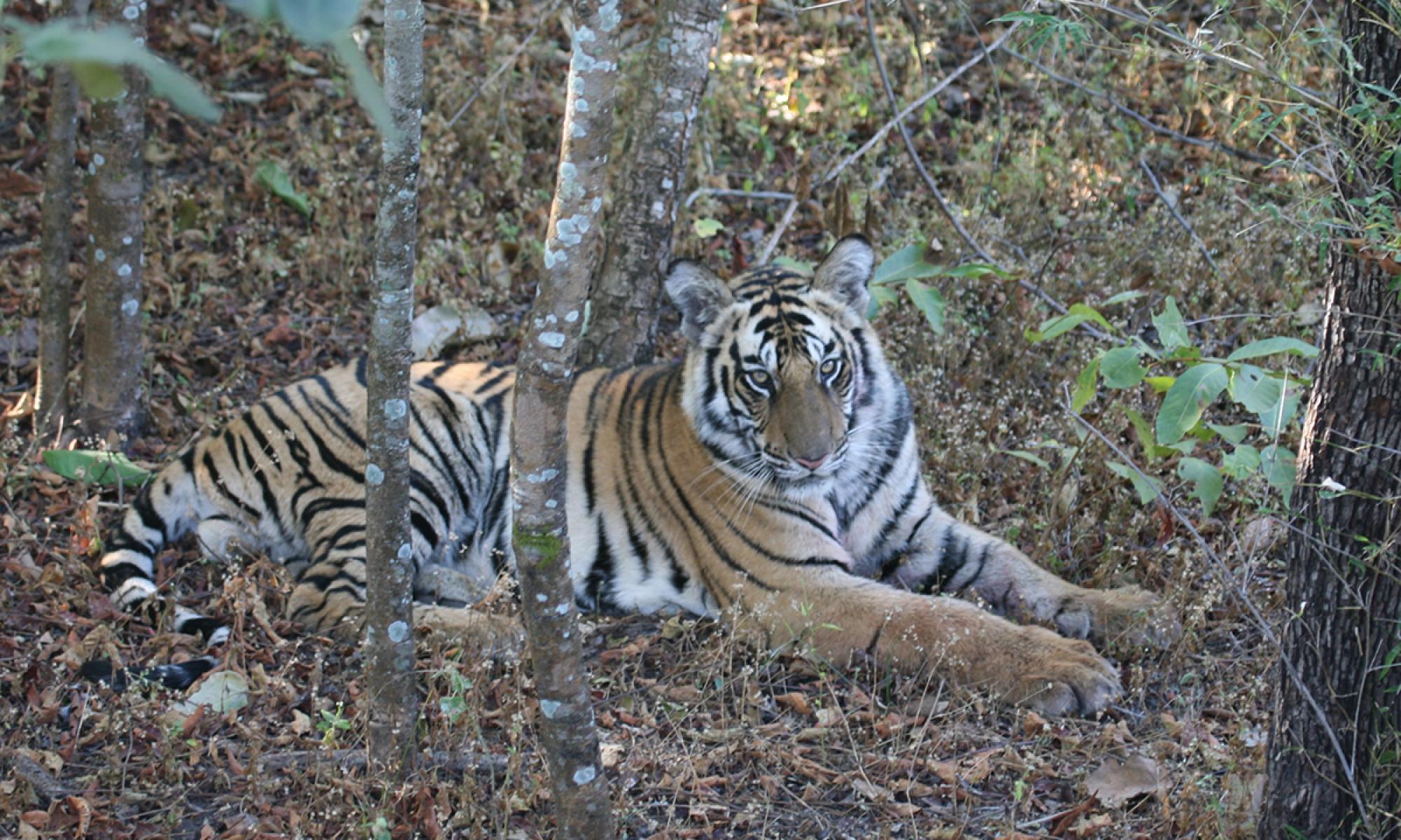 Durga Wildlife